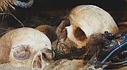 Pirate Skulls image