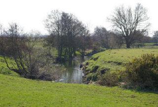 River Dove